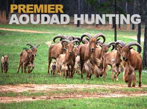 aoudad hunting expedition