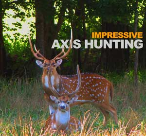 Axis Deer Hunting Tennessee
