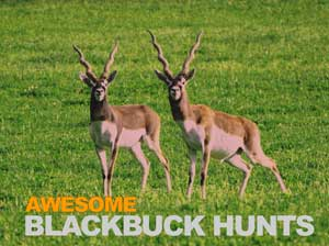 blackbuck hunting expedition