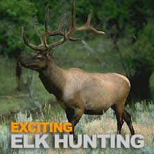 Elk Hunting Tennessee