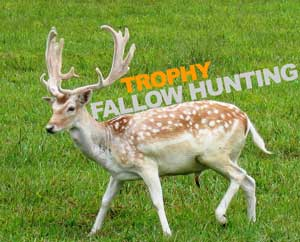 Fallow Deer Hunts Tennessee